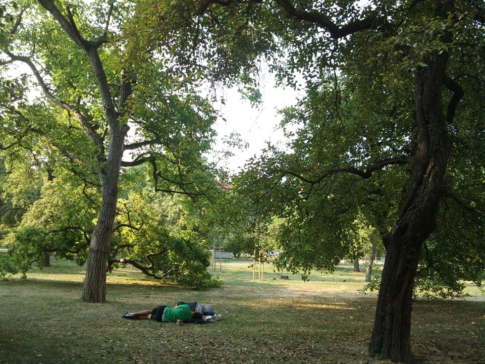 Two men sleeping in the park, under big trees. Photo: Andrea Gerak